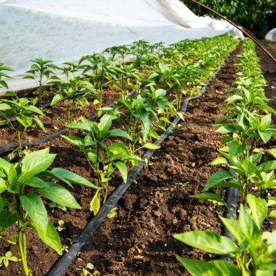 How to Become a 'Plant Whisperer:' 3 Things You Need to Know About Drip Irrigation Systems