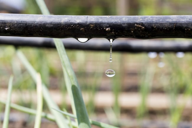 5 Benefits of Using a Drip Irrigation System